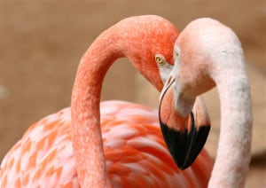 things to do for free in Milan: pink flamingos