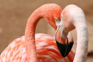 things to do for free in Milan: pink flamingos